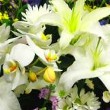 その他の花の香り